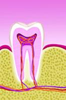 歯周病って命にかかわる?